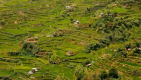 Q&A: Heritage rice terraces blend culture, modern science