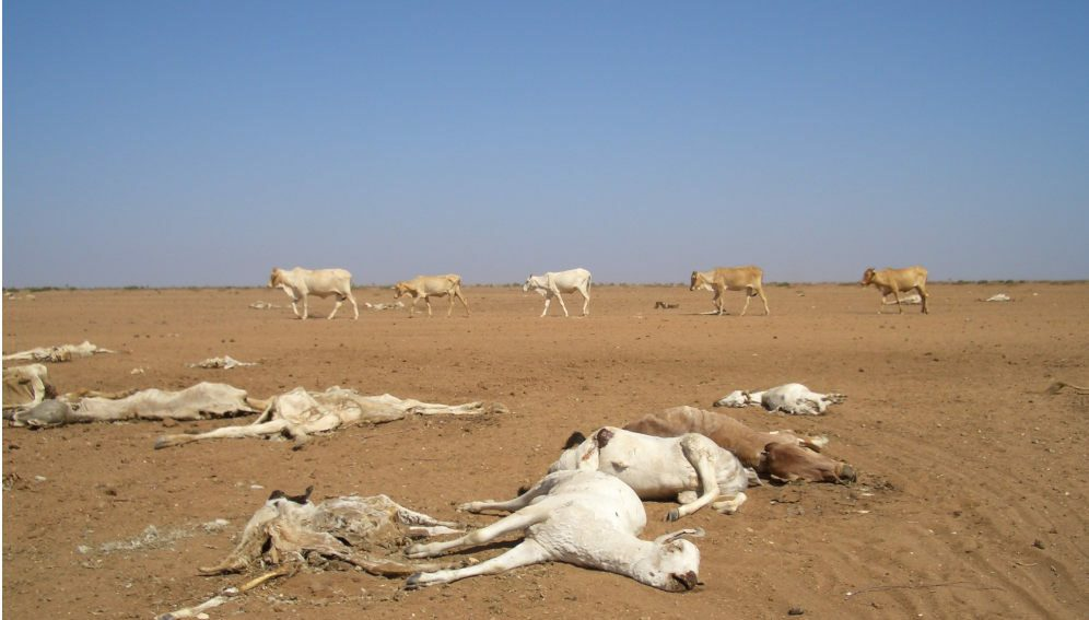 death by drought