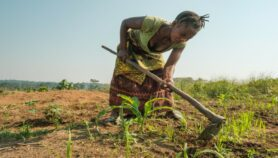 Invest in research to save Africa's agriculture