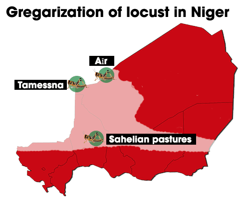 gregarization_areas of locust.png