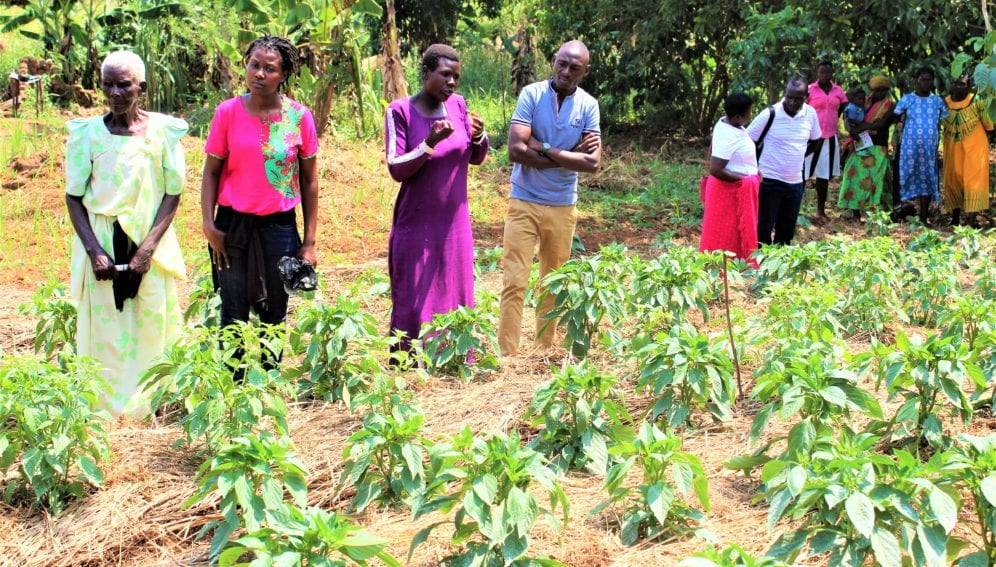 Learning to grow vegetables in Hoima