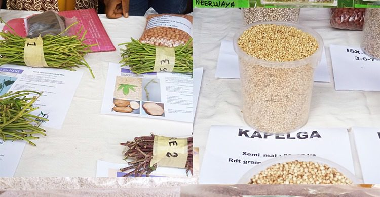 Seeds from Burkina Faso