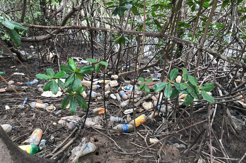 Mangrove littered with plastic. The trash is picked up twice a month, says Sophia Jimenez, and the women are committed to protecting the area because different species of mangrove support different species of mollusc.