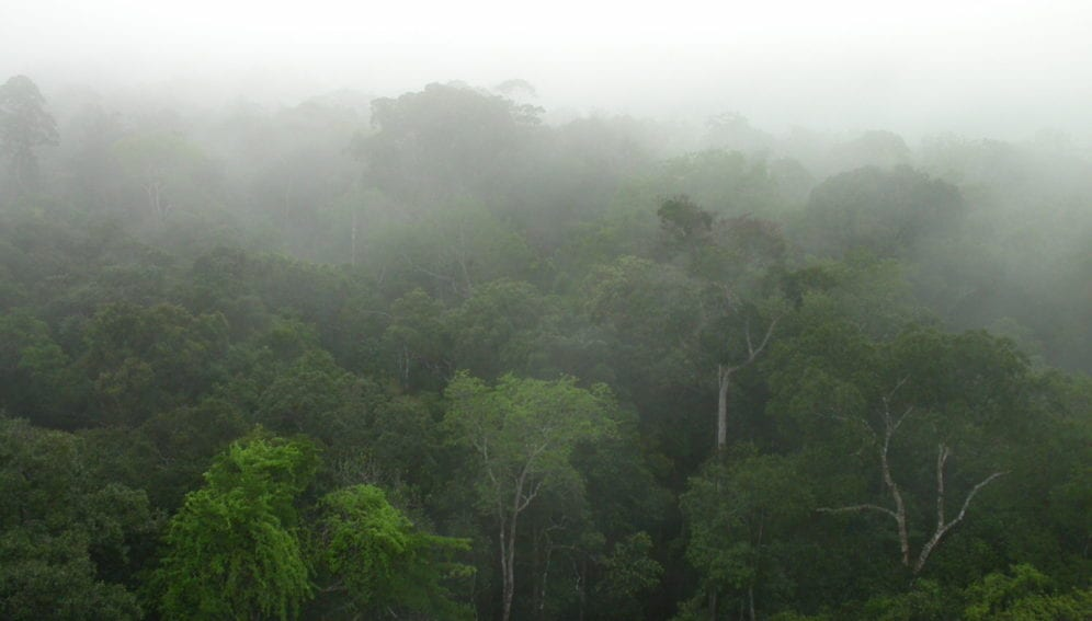 Forest_Canopy_Central_Amazonia_Hans_ter_Steeg_1600x1200px