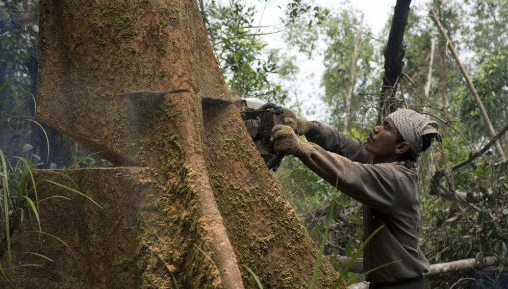 logging for palm oil