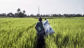 Tech boost for Asia's rice sector