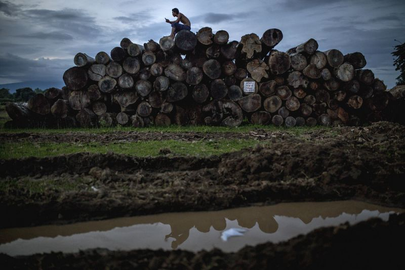 A man sits on a pile of logs