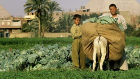 Producing food sustainably