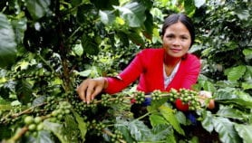 Coffee crisis brewing as planet heats up