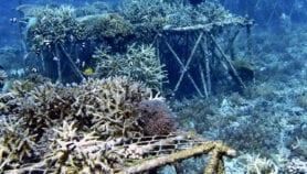 Marine protected areas failing to conserve biodiversity