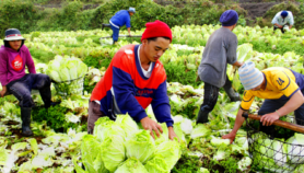 Crowdfunding venture gives farmers access to funds