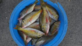Fisheries policies urged to prioritise nutrition goals
