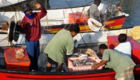 SUPERSEAS project sets sail to help small fishers