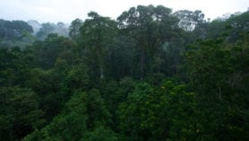 Asia Pacific old-growth forest decline fastest globally