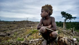 Invest in indigenous people to protect forests – study