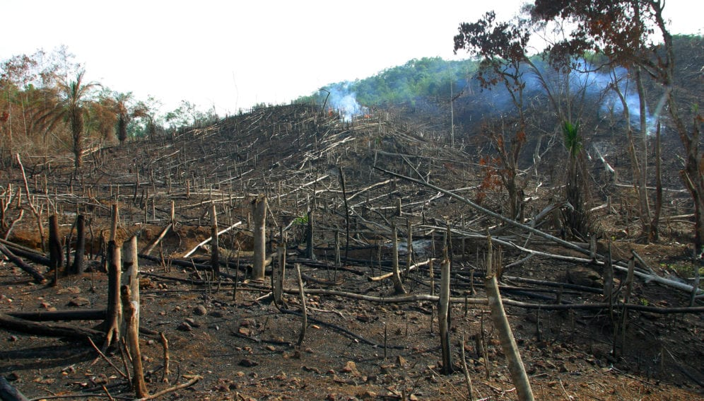 Most countries are better off with intact forests