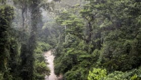 Travelling pollution from East Asia imperils rainforest