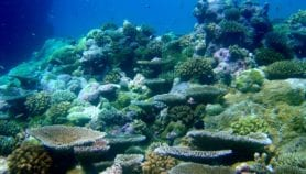 Some coral reefs are proving tough to climate change