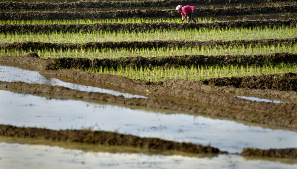 rice_field_with_farmer_in_red_Chris_Stowers_Panos
