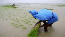 Tropics most prone to rainfall-related soil erosion