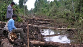 Re-growing logged forests not all that sustainable