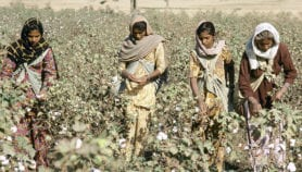 'India never benefited from genetically modified cotton'