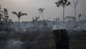 Nature losses threaten emerging economies