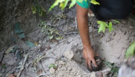 Reforestation to fight climate change impacts has limits