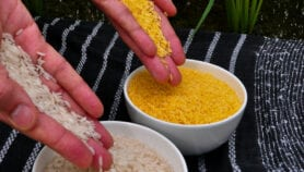 Golden Rice's unfulfilled promise