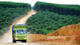 Palm oil alternatives require more land – study