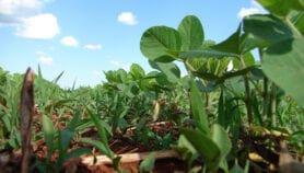 'Farmers unaware of ozone's impact on crop loss'