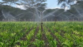 Asian-style Green Revolution unsuitable for Africa
