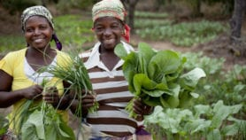 Promoting local vegetables R&D to benefit smallholders