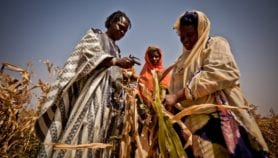 Weather-based insurance 'could benefit smallholders'