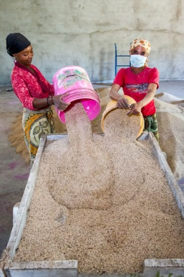 Women clean sesame seeds prior to bagging at Farm Africa established warehouse in Babati District in northern Tanzania