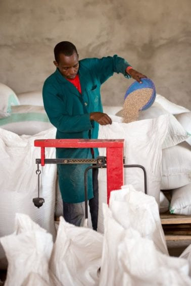 After cleaning, the sesame seeds are weighed and packed into bags at a warehouse cooperative set up by Farm Africa