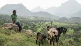 Impacts of missing livestock data in Africa