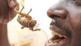 Insect science: the need for more attention in Africa