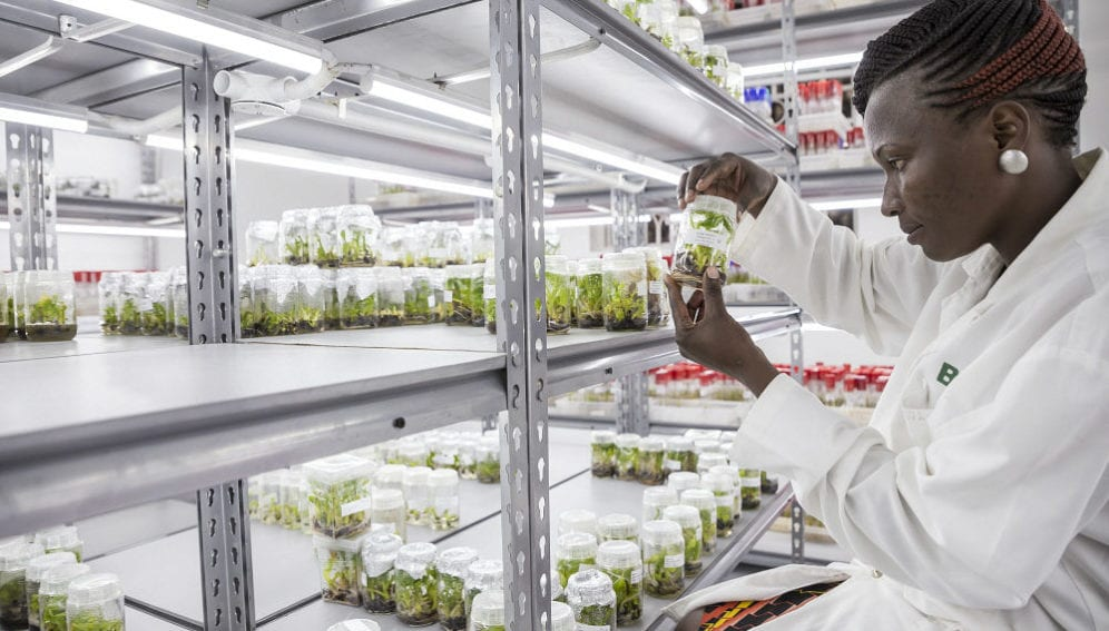A scientist at the National Agricultural Research Organisation