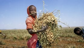 Why climate-smart agriculture is crucial to Africa