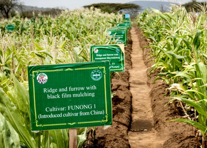 Dryland Agriculture project