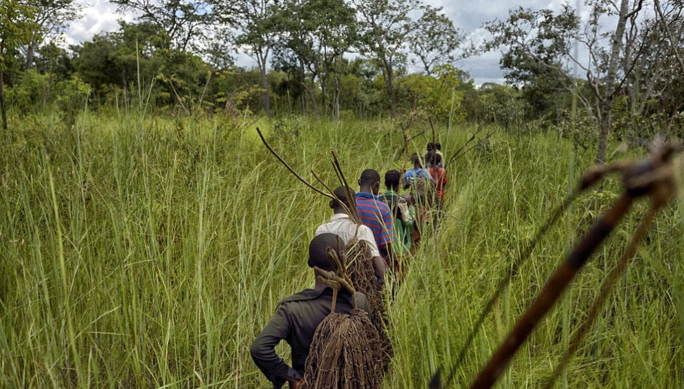 Ethnic Twa pygmies hunting in the bush with traditional weapons