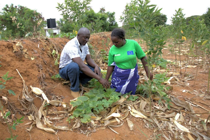 Onesmus is giving instructions to Eunice Kimanzi, a teacher and farmer, about soil protection by growing plants as one of the ways of remaining resilient