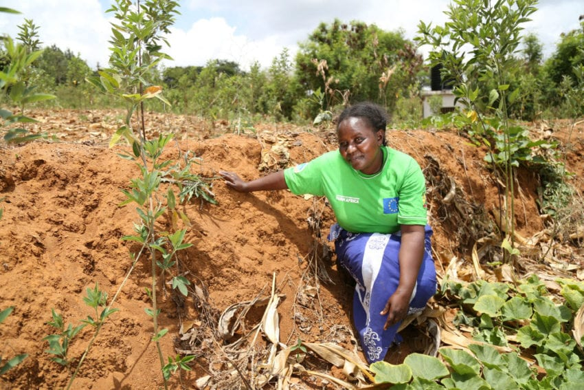 Kimanzi who is one of the beneficiaries of Farm Africa trainings in her farm where she is practising trenching for water conservation