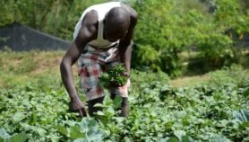 Making African agriculture achieve its potential