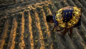 Smallholders rely on informal seed systems