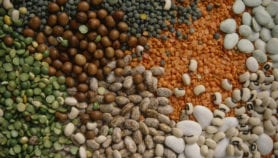 Agri-tech for Africa's food security, development