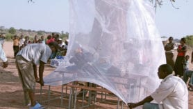 Climate change 'could raise malaria risk in cool areas'