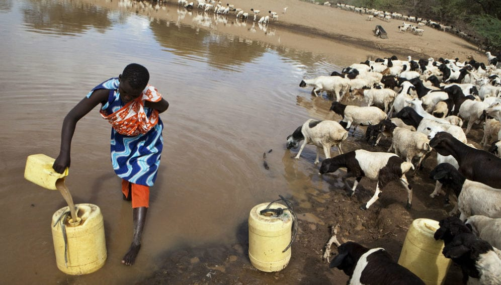 Maasai woman is collecting water from a check dam