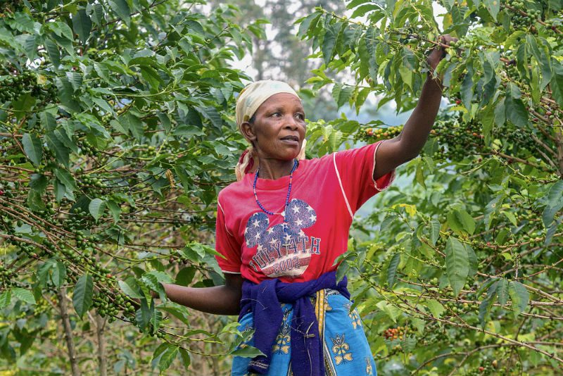 Maria Bedabazingwa coffee farmer